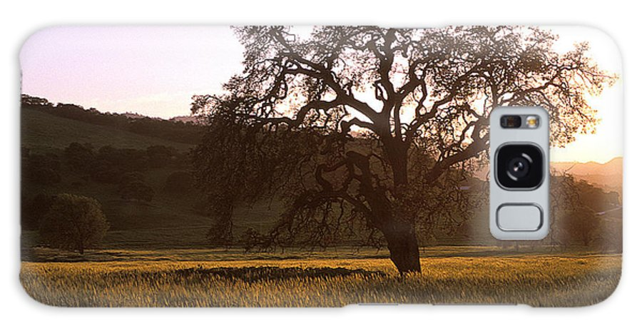 Oak Trees Galaxy S8 Case featuring the photograph California Hwy 25 Oak by Kathy Yates