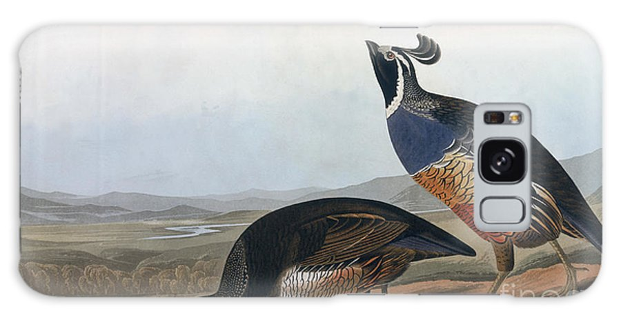 Californian Partridge Galaxy S8 Case featuring the drawing Californian Partridge by John James Audubon