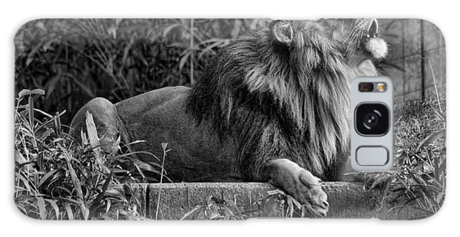 Lion Galaxy S8 Case featuring the photograph Call Of The Wild Bw by Keith Lovejoy