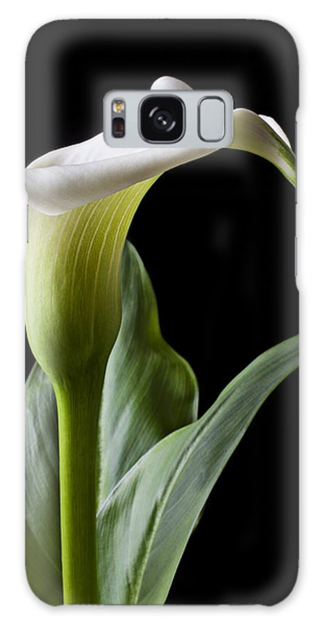 Calla Lily Galaxy S8 Case featuring the photograph Calla Lily With Drip by Garry Gay
