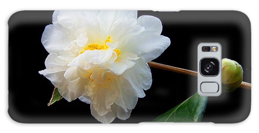 Camelia Galaxy S8 Case featuring the photograph Camelia Trio by Laurie Paci