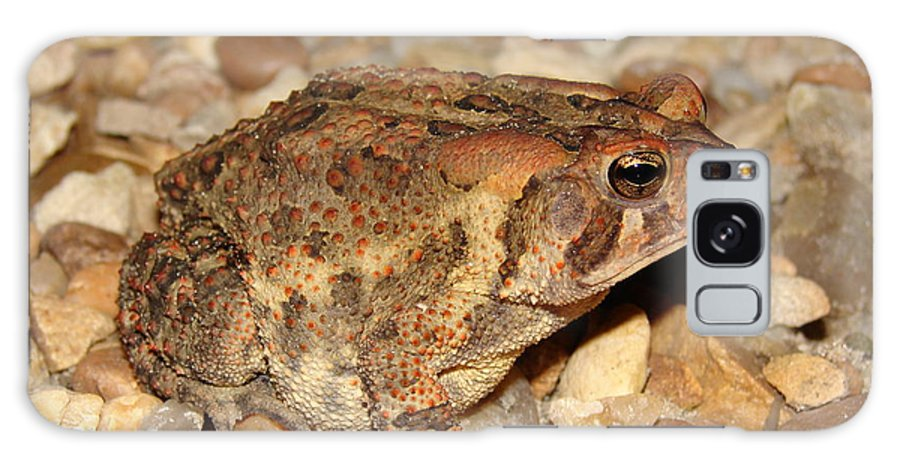 Camouflage Galaxy S8 Case featuring the photograph Camouflage Toad by Brett Winn