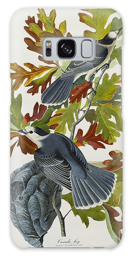 Canada Jay (corvus Canadensis) Plate Cvii From 'the Birds Of America' (aquatint & Engraving With Hand-colouring) By John James Audubon (1785-1851) Galaxy S8 Case featuring the drawing Canada Jay by John James Audubon
