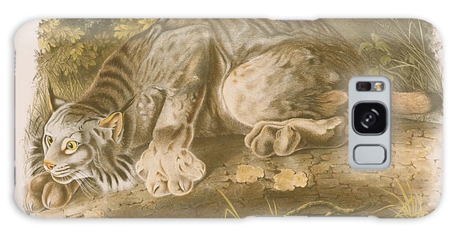Cat Galaxy S8 Case featuring the drawing Canada Lynx by John James Audubon
