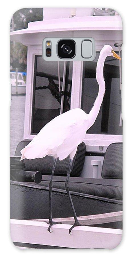Florida Galaxy S8 Case featuring the photograph Captain Long Legs by Ian MacDonald