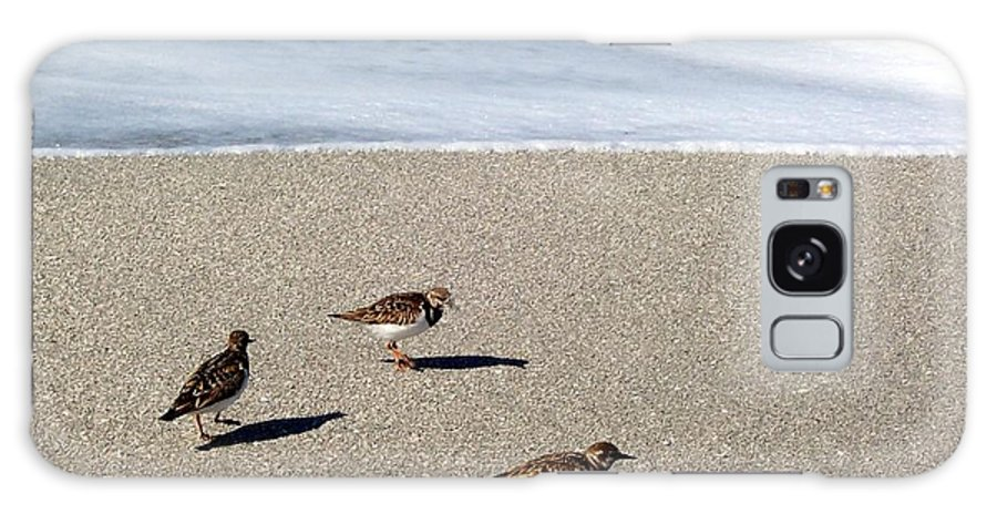 Beach Galaxy S8 Case featuring the photograph Captiva Brids by Elizabeth Klecker