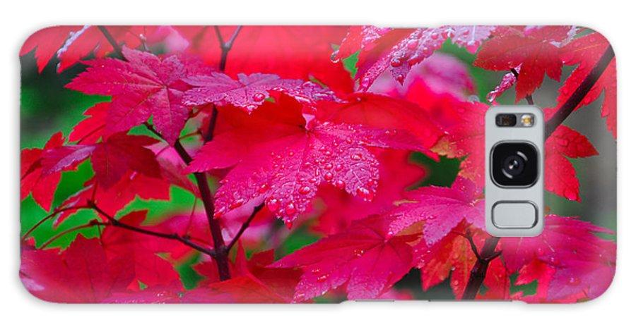 Autumn Galaxy S8 Case featuring the photograph Cascade Autumn Leafs 2 by Noah Cole