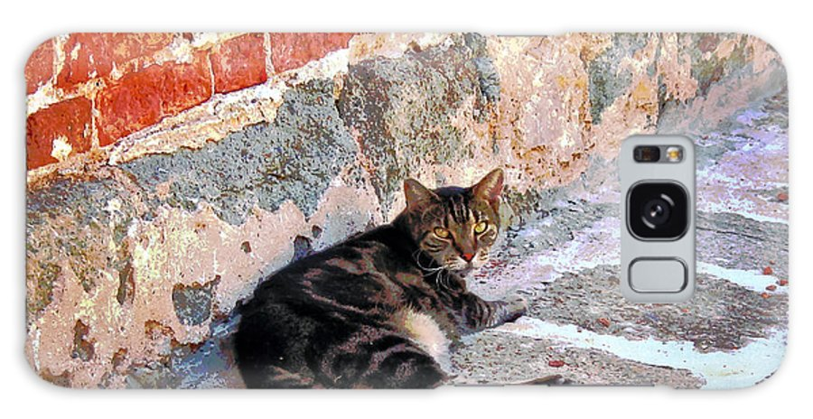 Cats Galaxy S8 Case featuring the photograph Cat Against Stone by Susan Savad