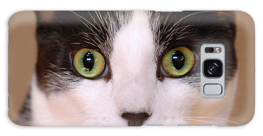 Pet Galaxy S8 Case featuring the photograph Cat Eyes by Jill Reger