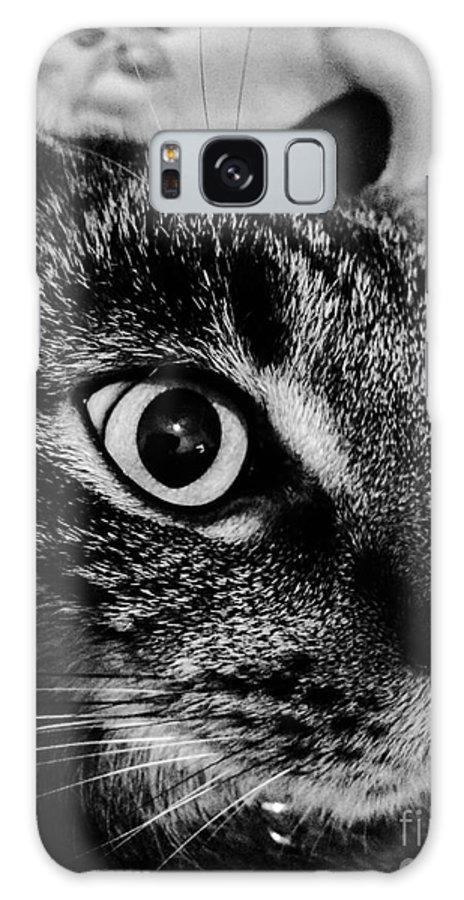 Cat Galaxy S8 Case featuring the photograph Cat Eyes by Michael Gailey