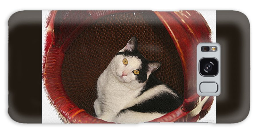 Cat Galaxy Case featuring the photograph Cat In A Basket by Margie Wildblood