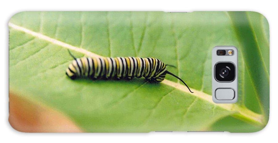 Caterpillar Galaxy S8 Case featuring the photograph Caterpillar by Kathy Schumann