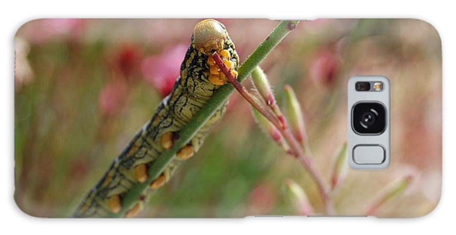 Caterpillar Galaxy S8 Case featuring the photograph Caterpillar Munching by Jean Booth