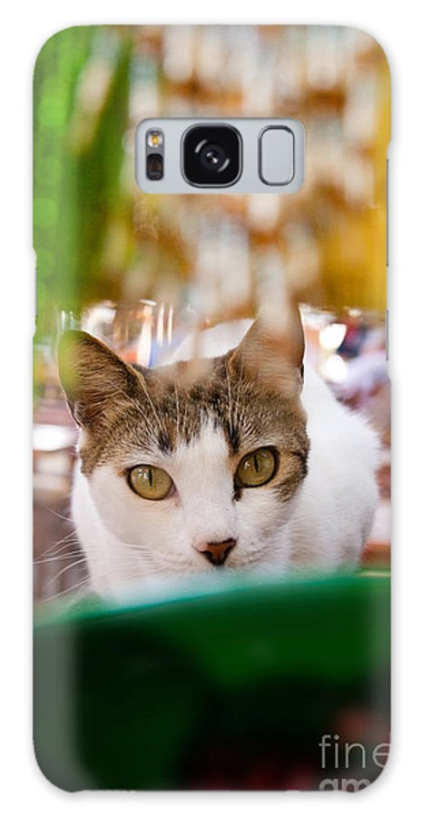 Cat Galaxy S8 Case featuring the photograph Cat's Eye On Me by Sven Brogren