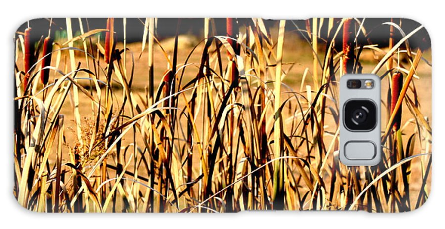 Cattails Galaxy S8 Case featuring the photograph Cattails by Diane Merkle