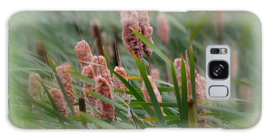 Plants Galaxy S8 Case featuring the photograph Cattails by Lori Seaman