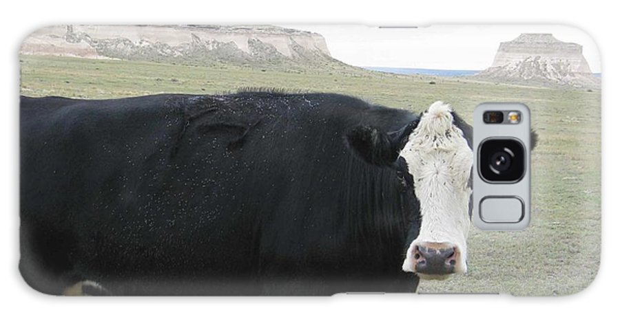 Rural Galaxy S8 Case featuring the photograph cattle at Pawnee Butte Colorado by Margaret Fortunato