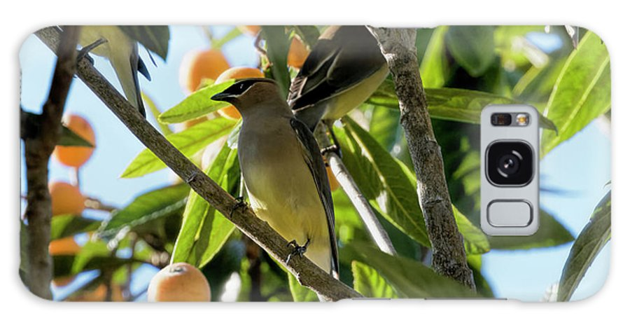 April Galaxy S8 Case featuring the photograph Cedar Waxwings by Phill Doherty
