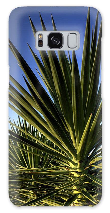 Yucca Plant Blue Skies Chalreston Cactus Dustin Ryan Hdr Lowcountry Folly Beach Galaxy S8 Case featuring the photograph Charleston Yucca by Dustin K Ryan