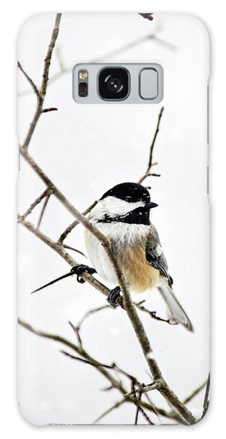 Chickadee Galaxy S8 Case featuring the photograph Charming Winter Chickadee by Christina Rollo