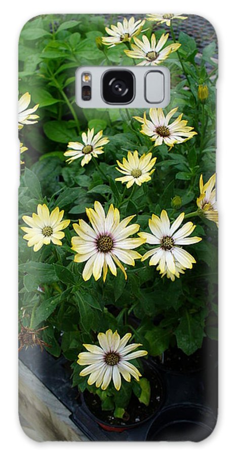 Flowers Galaxy S8 Case featuring the photograph Chatter by Peggy King