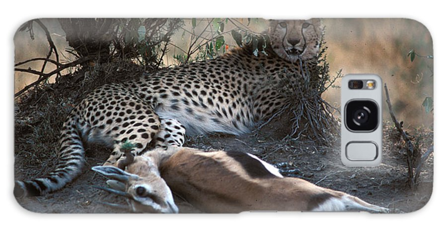 Spots Galaxy S8 Case featuring the photograph Cheetah With Kill by Carl Purcell