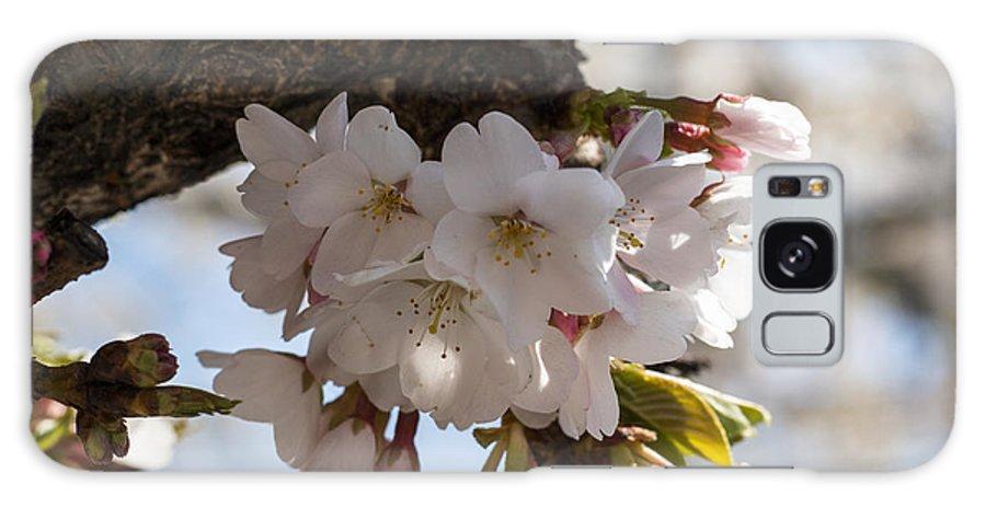 Cherry Blossom Galaxy S8 Case featuring the photograph Cherish by Candalis Escudero