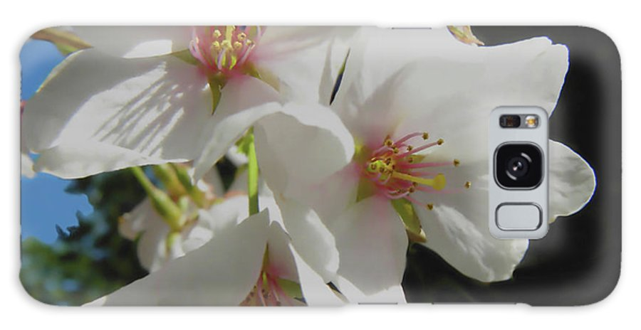 Cherry Blossoms Galaxy S8 Case featuring the photograph Cherry Blossoms by Sandi OReilly