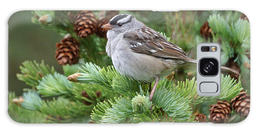 Chickadee Galaxy Case featuring the photograph Chickadee by Heather Coen