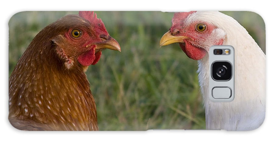 Chicken Hen Farm Rural Curious Bird Country Galaxy S8 Case featuring the photograph Chickens by Andrei Shliakhau