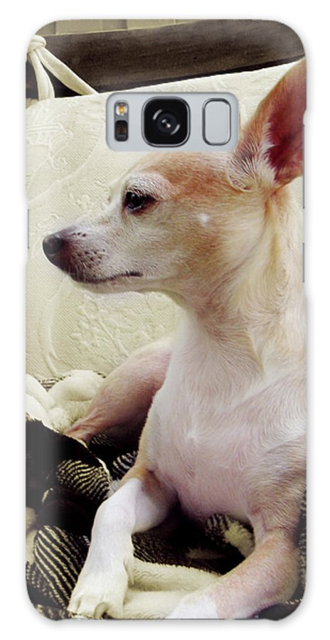 Art Galaxy S8 Case featuring the digital art Chihuahua Chiqui Portrait 3 by Miss Pet Sitter