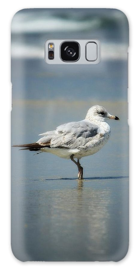 Sea Gull Galaxy S8 Case featuring the photograph Chillin' by Mandy Shupp