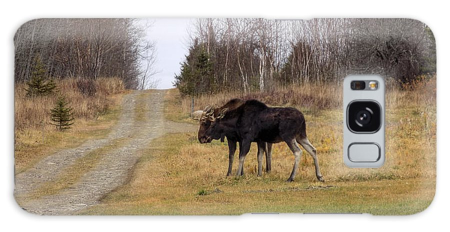 Moose Galaxy S8 Case featuring the photograph Chillin' Together by William Tasker