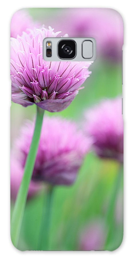 Allium Schoenoprasum Galaxy S8 Case featuring the photograph Chives by Neil Overy