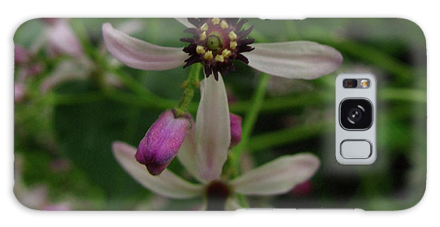 Flower Galaxy S8 Case featuring the photograph Chock Cherry Flower by Donna Brown