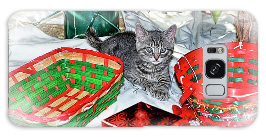 Recent Galaxy S8 Case featuring the photograph Christmas Kitten by Geraldine Scull