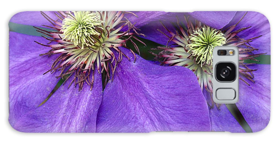 Flowers Galaxy S8 Case featuring the photograph Clematis Detail by Sandra Bronstein