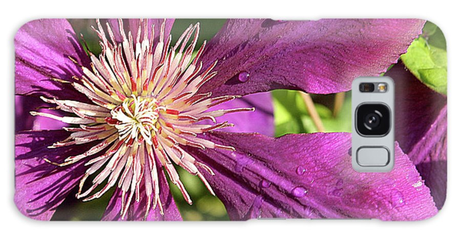 Flower Galaxy S8 Case featuring the photograph Clematis by Jean Macaluso