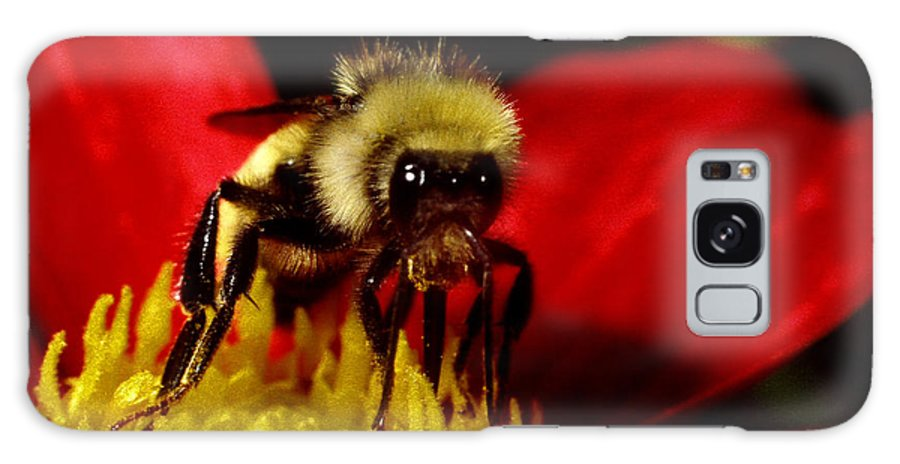 Bee Insect Flower Close Up Macro Galaxy S8 Case featuring the photograph Close Up Bee by George Tuffy