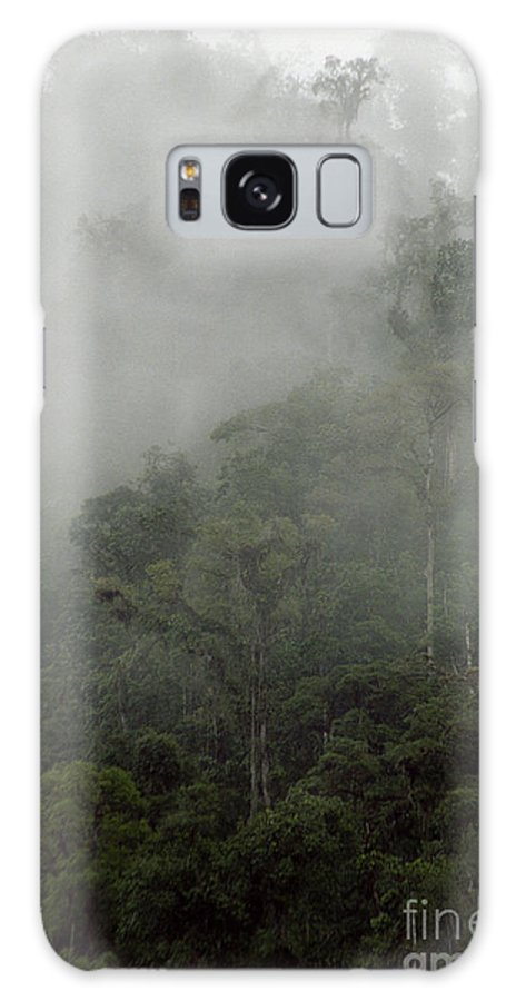 Rainforest Galaxy S8 Case featuring the photograph Cloud Forest by Kathy McClure