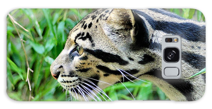 Clouded Leopard Galaxy S8 Case featuring the photograph Clouded Leopard In The Grass by Kristin Elmquist