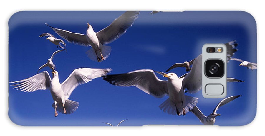 Seagull Birds Flight Galaxy Case featuring the photograph Cnrg0302 by Henry Butz