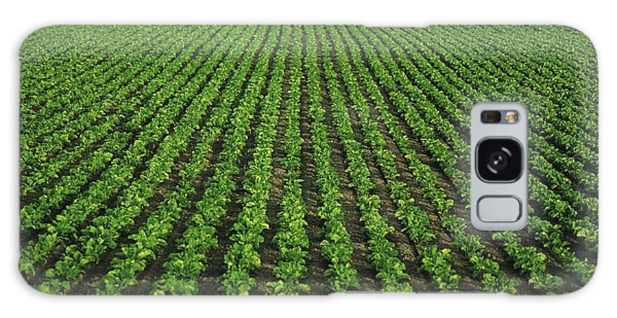 Agriculture Galaxy S8 Case featuring the photograph Co Tipperary, Ireland Sugar Beet by The Irish Image Collection