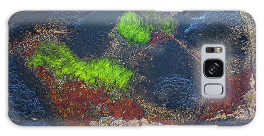 Blue Galaxy S8 Case featuring the photograph Coastal Floor At Low Tide by Heiko Koehrer-Wagner
