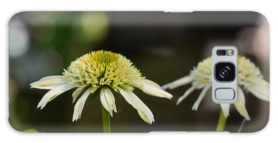 Coconut Lime Echinacea Galaxy S8 Case featuring the photograph Coconut Lime Echinacea by Maria Urso