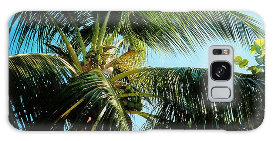 Jamaica Galaxy S8 Case featuring the photograph Coconut Tree by Debbie Levene