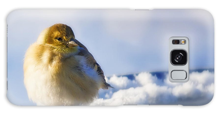 American Goldfinch Galaxy S8 Case featuring the photograph Cold American Goldfinch by Al Mueller