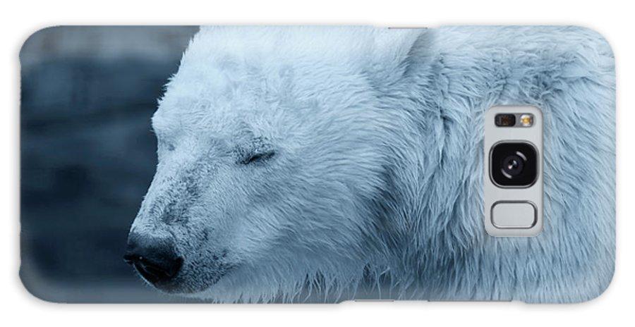 Polar Bear Galaxy S8 Case featuring the photograph Cold Morning by Douglas Barnard
