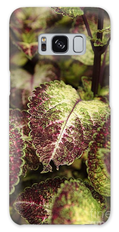 New England Galaxy Case featuring the photograph Coleus Plant by Erin Paul Donovan