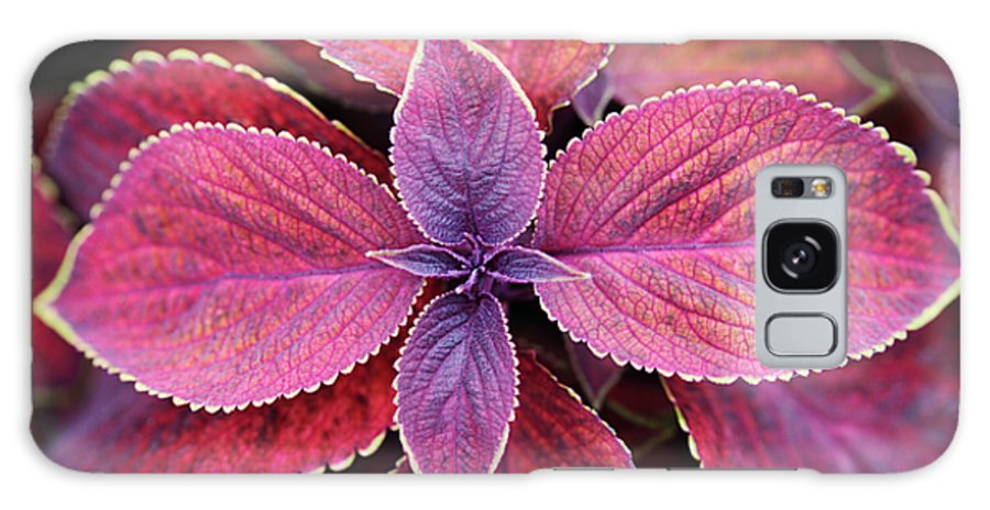 Solenostemon Galaxy S8 Case featuring the photograph Coleus Red Rosie by Neil Overy